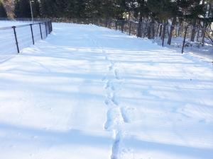 雪道300